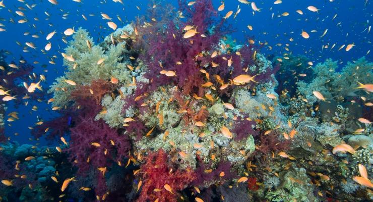 Aike Willemsen - Tien jaar Rode Zee