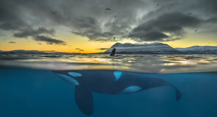 Nature Photographer of the Year - stuur nu je foto's in!