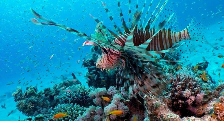 Dirk Van den Bergh - De meest spectaculaire duiken van Dahab