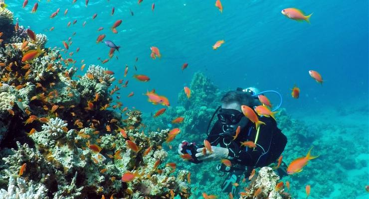 Dirk Van den Bergh - Close encounter met de giftigste vis op aarde