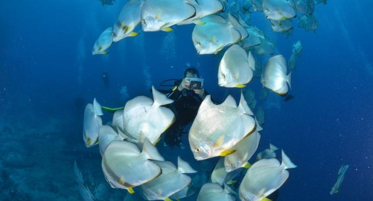 Single Travellers Week en Last Minutes met Diving Holidays