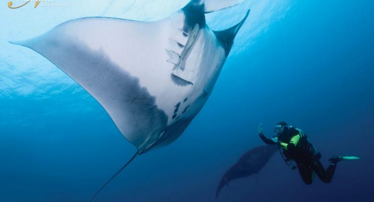 Socorro: dé duikbestemming voor onvergetelijke encounters met groot zeeleven!