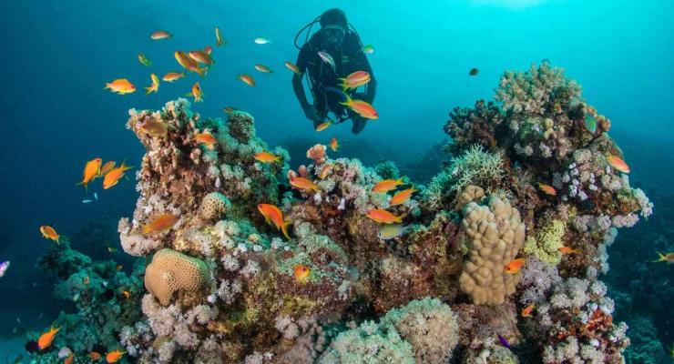 Handboek digitale onderwaterfotografie: «Een never-ending story»