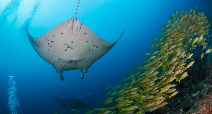 HOT: Liveaboards in de Malediven! Boek nu voor 2019 bij Diving World