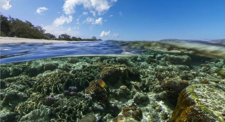 Ivf-koraal moet Great Barrier Reef redden