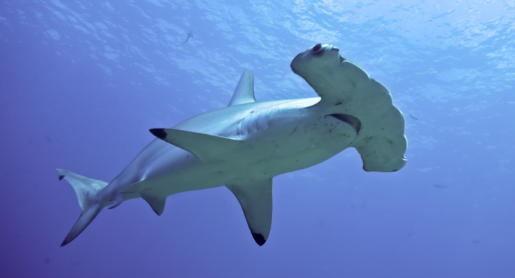 Last minute: combinatiereis Tubbataha Reef en Magic Oceans Dive Resort