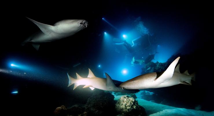 Ultieme duikreis op Maldive Mosaïque
