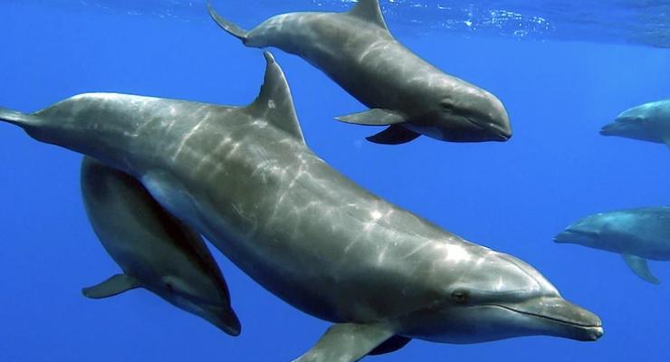 Moeder tuimelaar adopteert jong van andere dolfijnensoort