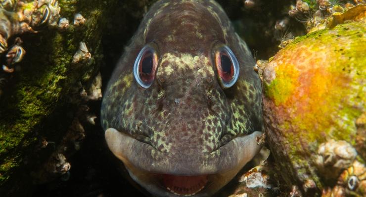 René Weterings - Kiekeboe spelen met steenslijmvisjes