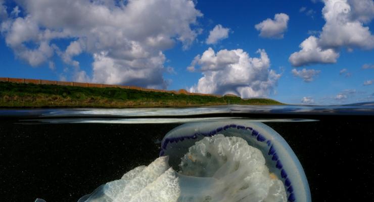Zeepaddenstoel half-half - Het verhaal achter de foto