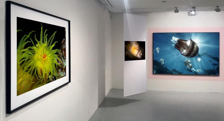 Doe iets met je onderwaterfoto's!