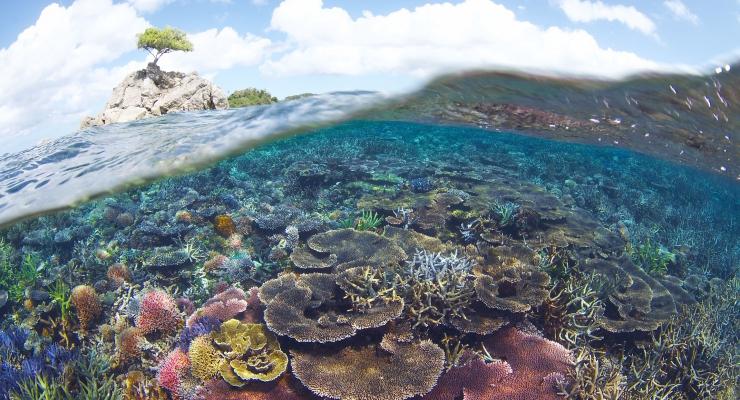 Drie nieuwe beschermde zeegebieden in Indonesië