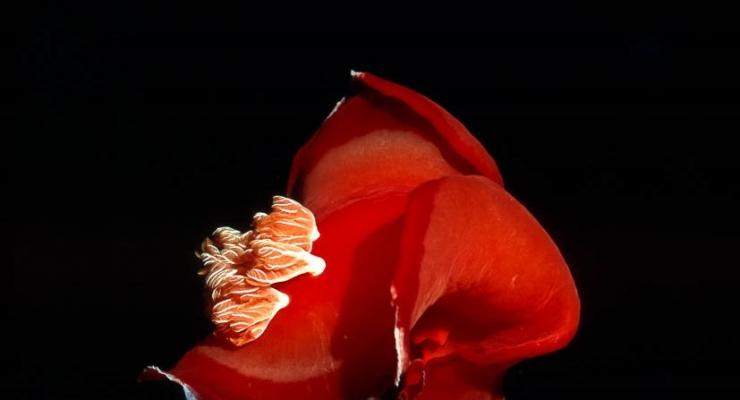 Analoge Spaanse danseres - Het verhaal achter de foto