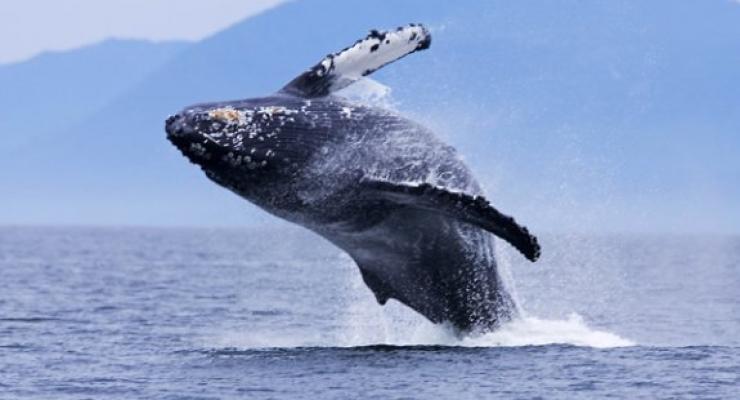 Walvishaaimoeders fluisteren