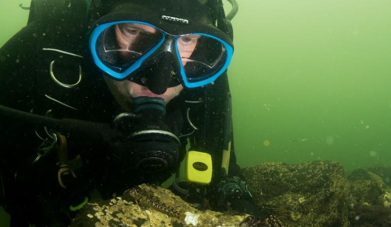 Duikreporter in beeld: Mirjam van der Sanden