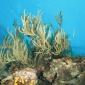 Onderzoek toont aan: koraalriffen hebben last van sommige zonnebrandcrèmes