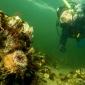 John Landa - Een duikje met collega's
