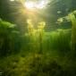 Joost Jochems - En nu wordt het steeds mooier onder water!
