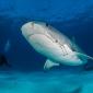 Leendert Smit - Naar de haaien (1)