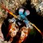 Adri Leijendekkers - Het walhalla voor macrofotografie