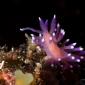 Aike Willemsen - Veel slakken op Sao Vicente