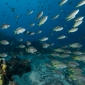 Aike Willemsen - Kaapverdië, vis, vis en nog meer vis!