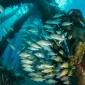 Saltpier snappers - Het verhaal achter de foto