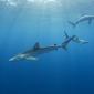 Azoren - Een week tussen de haaien en roggen