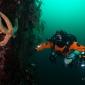 Techduiken met Black Marlin - opleidingen voor beginners en gevorderden