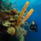Hitteplan voor duikers