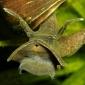 Berthold Raadsen - Slakken in mijn vijver