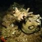 Cindy Weterings - Nachtduiken op Lanzarote, een onderwaterfilm