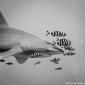 Lilian Dohmen - Naar de haaien