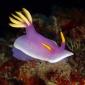 Wouter Hoogerwerf - Van Makassar tot Mantis shrimp (3)