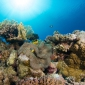 Lentespecial bij Diving Holidays