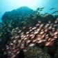 São Vicente: enorme scholen vis, wrakken én kans op manta's!