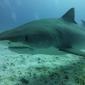 Susan Dogterom - Op de bodem zitten met haaien