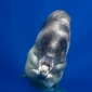 A cry from the ocean - Het verhaal achter de foto