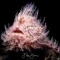 Masterclasses met onderwaterfotograaf Filip Staes