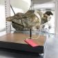 'Nieuwe' dolfijnsoort ontdekt in Westerschelde
