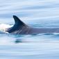 Walvis van 15 meter aangetroffen in haven Vlissingen