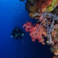 Sandra Boerlage - Een duik vol lol in Bunaken