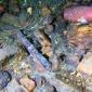 Noorse duikers vinden Nederlands scheepswrak uit 18de eeuw