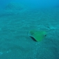 Kim Burgers - La Palma onder water