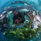 World Oceans Day - Stuur nu je foto's in!