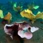 Gratis workshop Mariene biologie en Onderwaterfotografie bij Thalassa