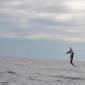 Voshaai springt uit Noordzee