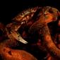 ONK Onderwaterfotografie 2019 - Masters - Mens en Natuur