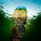 ONK Onderwaterfotografie 2019 - Starters - Thema