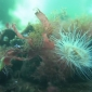 ONK Onderwatervideo 2019 - Koenraad de Vos